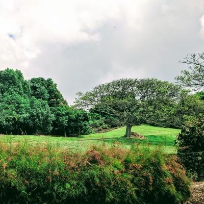 Hilo Park